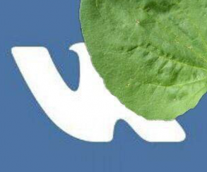 #ВКживи: Интернет два дня реагирует на перебои в работе «ВКонтакте»