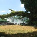 Скриншот Tekken Tag Tournament 2 – Изображение 26