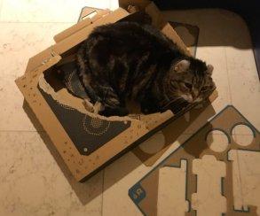 Наконец-то Nintendo сделала что-то для котов! Картонки Labo против домашних питомцев