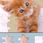 Скриншот Adorable Kitten Jigsaw Puzzle – Изображение 1