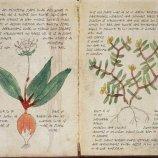 Скриншот Boïnihi: The K'i Codex – Изображение 4