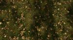 Этот мод для Skyrim сделает растительность по-настоящему реалистичной. - Изображение 8