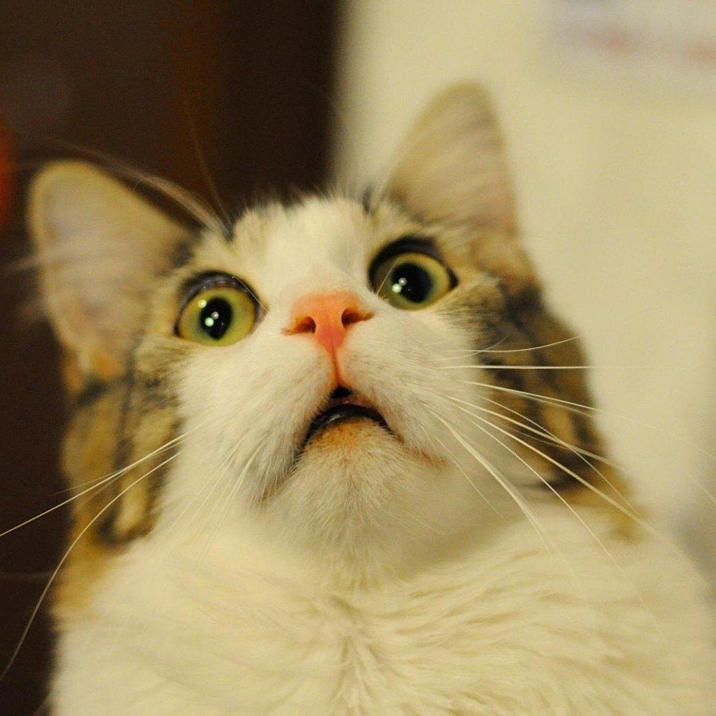 Ненависть, грусть, безысходность и коты. Вспоминаем самые забавные фотографии ко дню кошек!. - Изображение 3