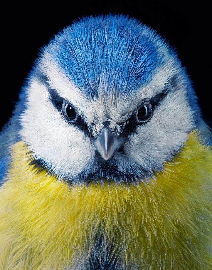 Фотограф сделал «модельные» портреты исчезающих и редких птиц   Канобу - Изображение 12920