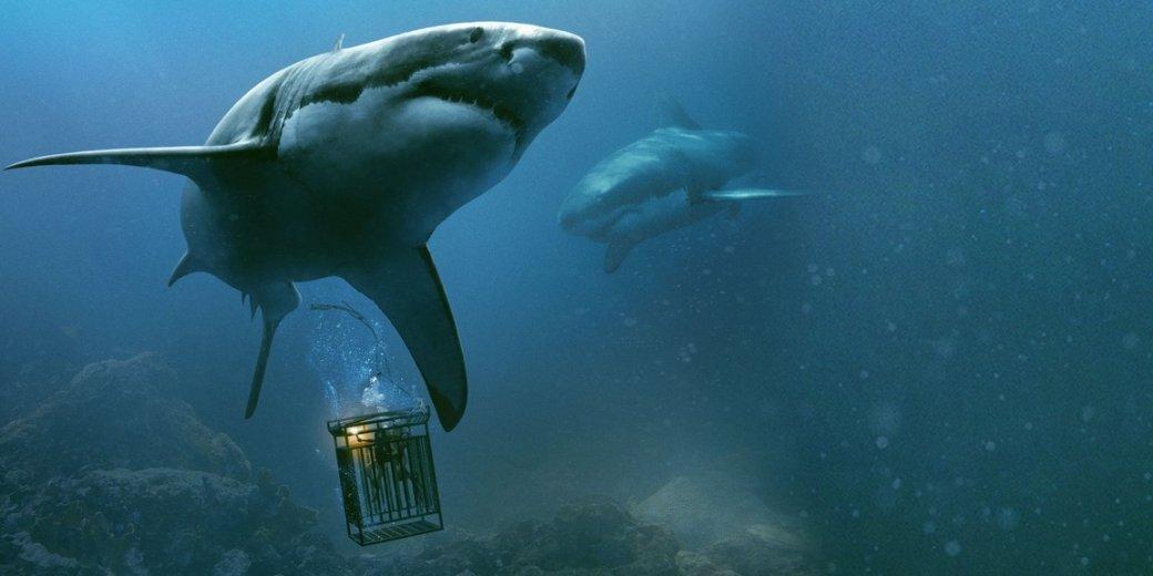 Нетолько «Челюсти!» Наша подборка лучших фильмов про акул. - Изображение 1