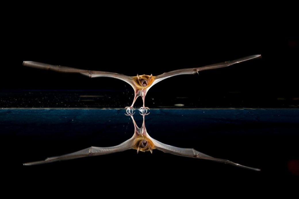 Хэллоуин еще некончился: лучшие фотографии летучих мышей отNatGeo | Канобу - Изображение 4684