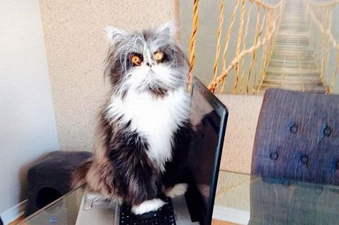 Ненависть, грусть, безысходность и коты. Вспоминаем самые забавные фотографии ко дню кошек!. - Изображение 19